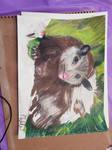 Opossum Drawing