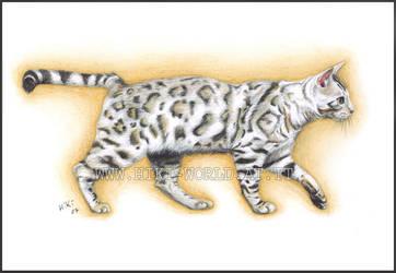 Bengal Cat by Hiki-Hiki