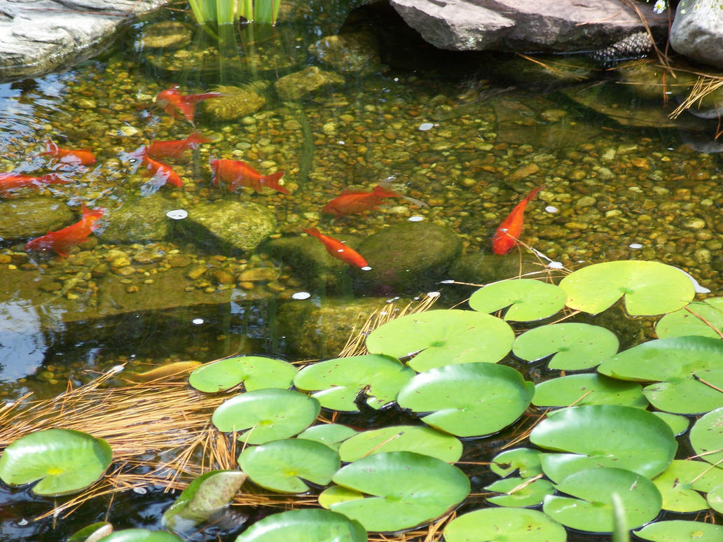 Water Garden 3 By Xxtayce On Deviantart