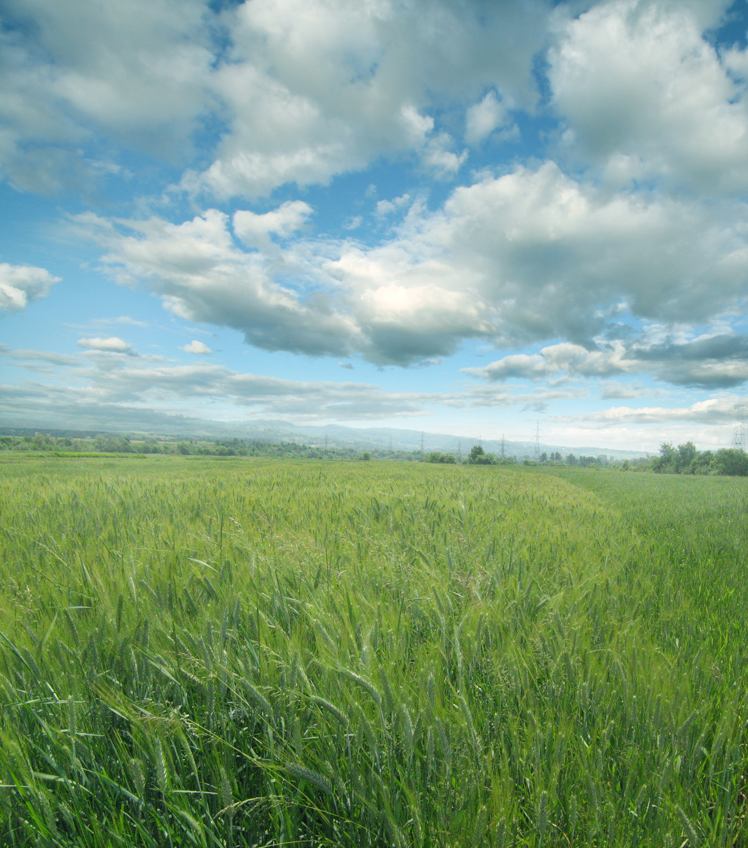 UNRESTRICTED - Sunny Field Premade