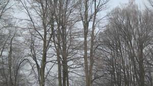 UNRESTRICTED - Creepy Trees