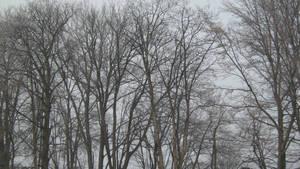 UNRESTRICTED - Creepy Trees II