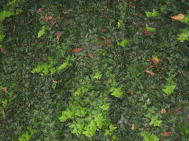UNRESTRICTED - Foliage Texture 1 by frozenstocks