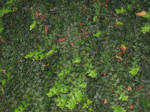 UNRESTRICTED - Foliage Texture 1