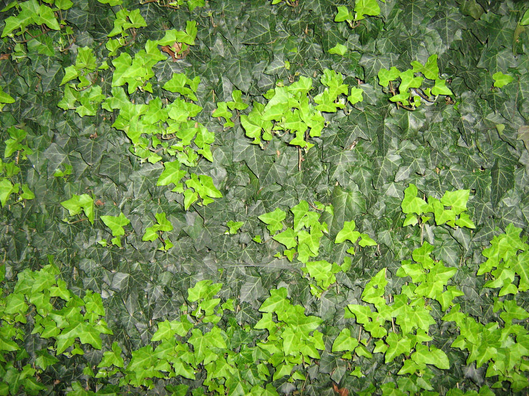 UNRESTRICTED - Foliage Texture 2 by frozenstocks