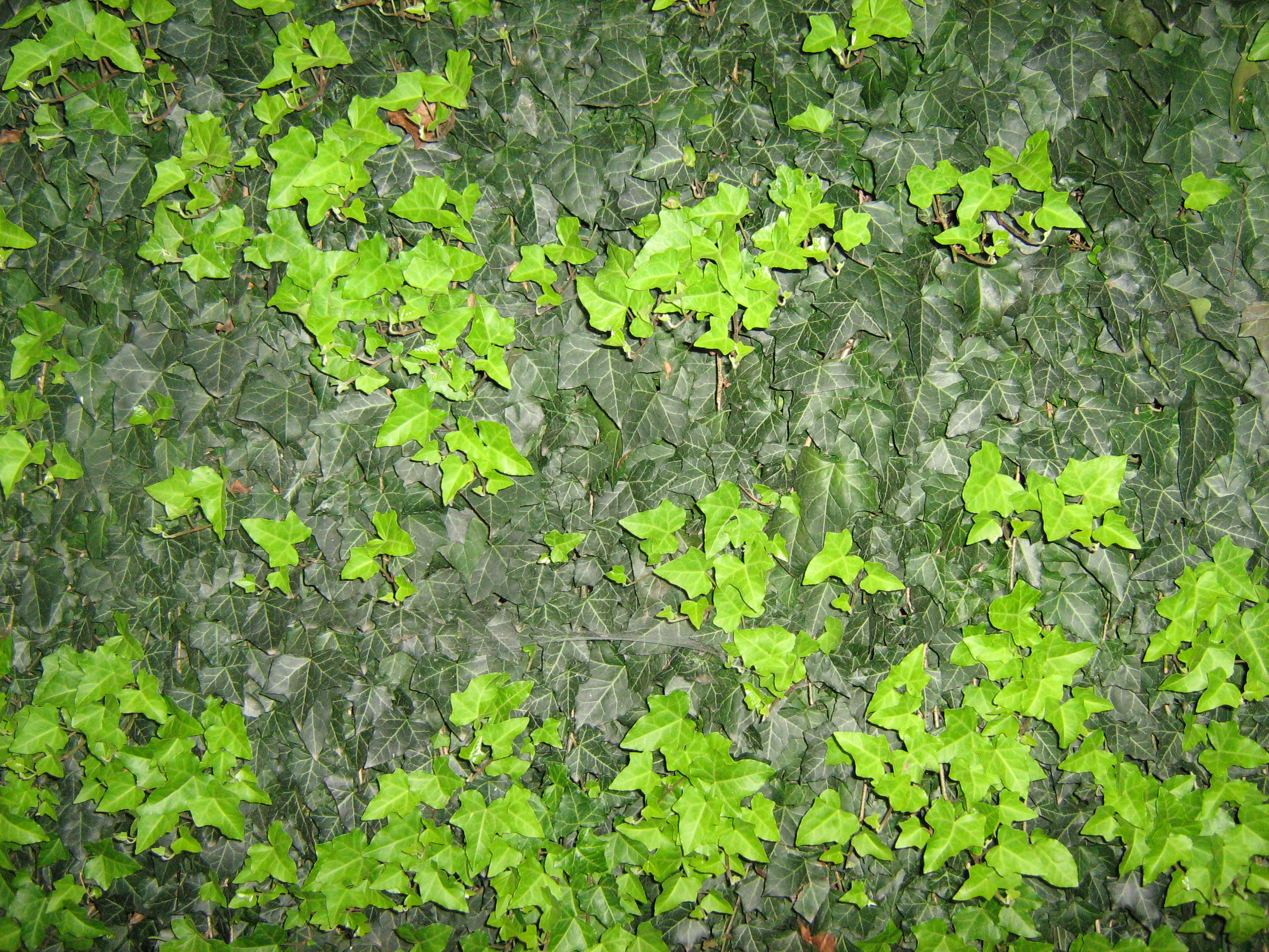 UNRESTRICTED - Foliage Texture 2