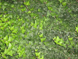 UNRESTRICTED - Foliage Texture 3 by frozenstocks