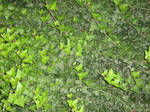 UNRESTRICTED - Foliage Texture 3