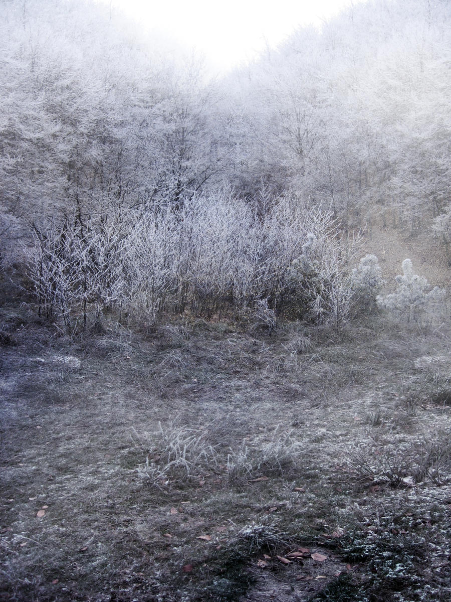 UNRESTRICTED - Frosty Land 2