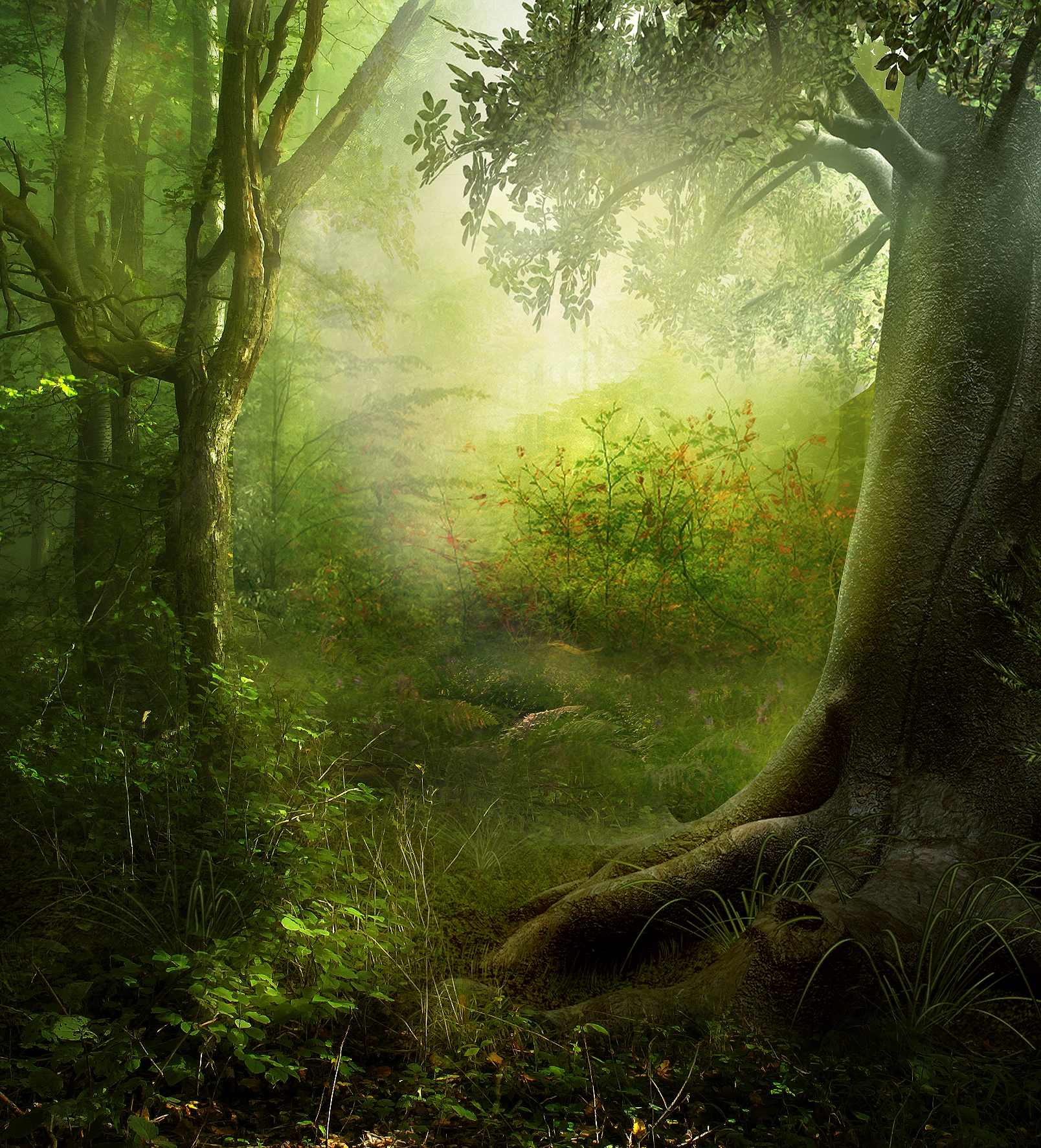 RESTRICTED - Enchanted Forest Premade