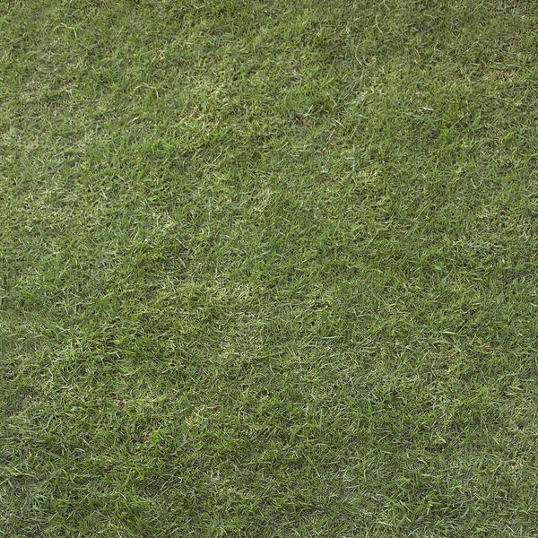 UNRESTRICTED - Grass Texture
