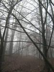 UNRESTRICTED - November '09 - Foggy Forest 8