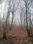 UNRESTRICTED - November '09 - Foggy Forest 10