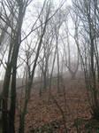 UNRESTRICTED - November '09 - Foggy Forest 11