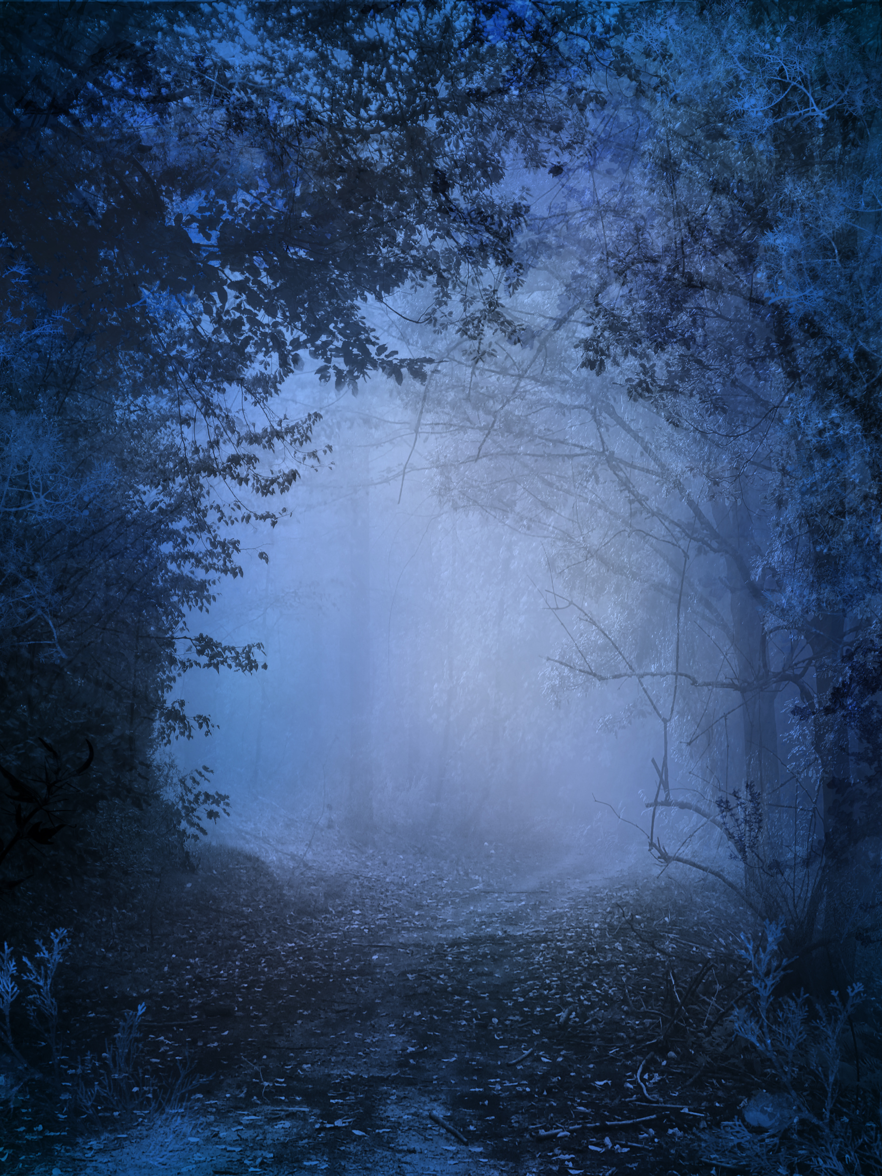 UNRESTRICTED - Mystery Woods Background 02