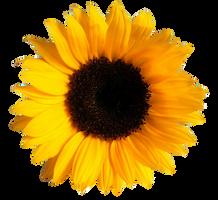 UNRESTRICTED - Flower 1 by frozenstocks