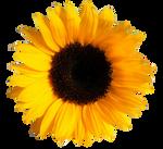 UNRESTRICTED - Flower 1