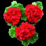 UNRESTRICTED - Flower 2