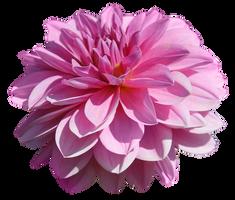 UNRESTRICTED - Flower 3 by frozenstocks