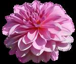 UNRESTRICTED - Flower 3