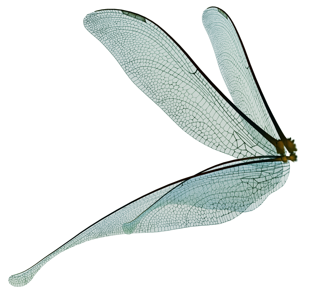 UNRESTRICTED - Dragonfly Fairy Wings Render