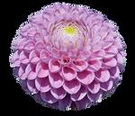 UNRESTRICTED - Flower 4 by frozenstocks