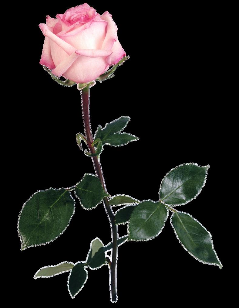 UNRESTRICTED - Flower 5