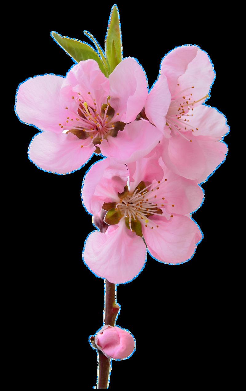 UNRESTRICTED - Flower 6 by frozenstocks