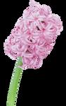 UNRESTRICTED - Flower 7