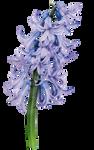 UNRESTRICTED - Flower 8