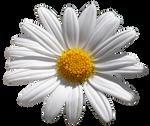UNRESTRICTED - Flower 10