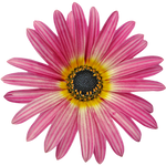 UNRESTRICTED - Flower 11