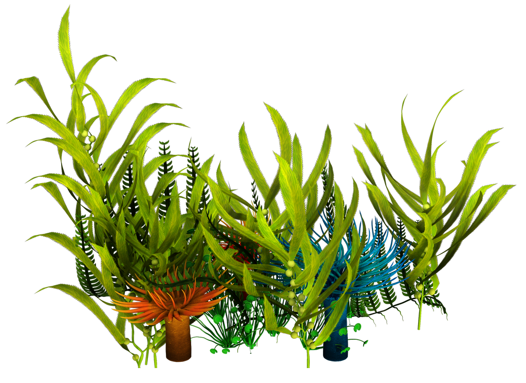 Aquatic Plants Under Water With Names