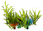 UNRESTRICTED - Underwater Plants  Render