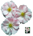 UNRESTRICTED - Flower 11 by frozenstocks