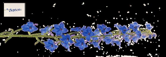 UNRESTRICTED - Flower 12 by frozenstocks