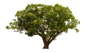 UNRESTRICTED - Tree Cutout