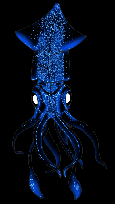 vampire squid drawing | Search Results | Dunia Pictures