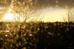 Rain by Lpixel