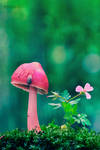 Pink by Nature
