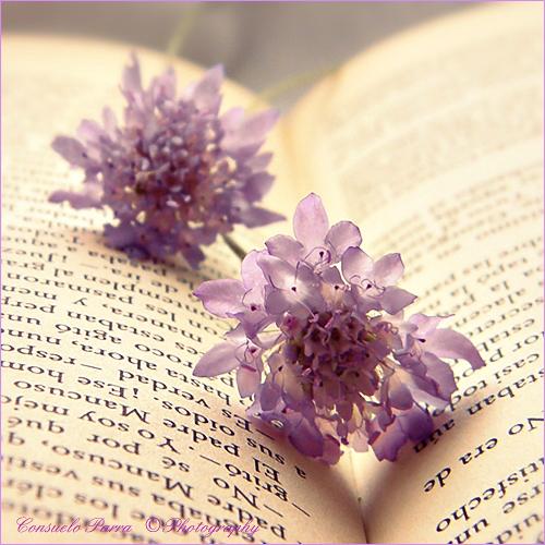 Book  42a32bfefd469749b64b8278776ee7ab-d41mzh9