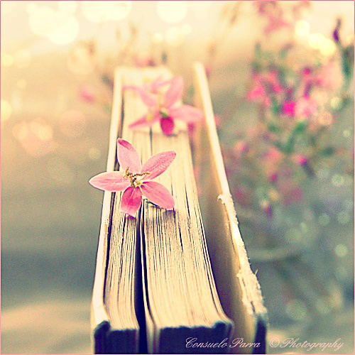 Book  - Page 2 47212b131647d421863881b54510611b-d41wj04