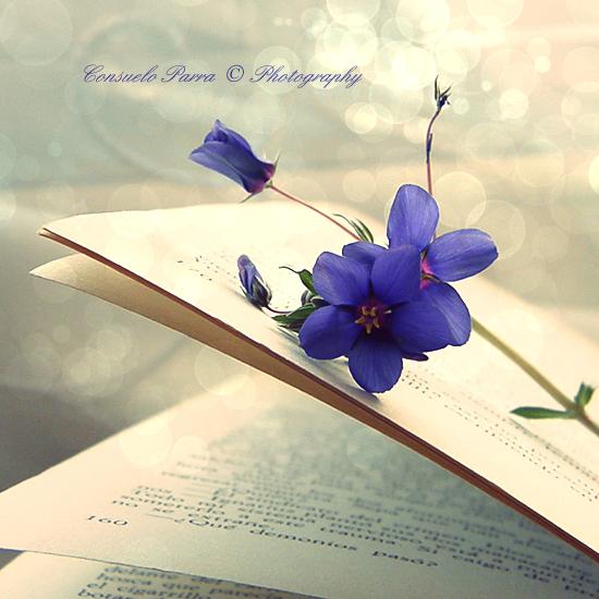 A Beautiful Book by Aeternum-Art