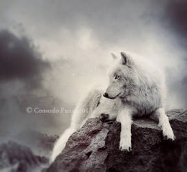 Wolf Alone by Consuelo-Parra