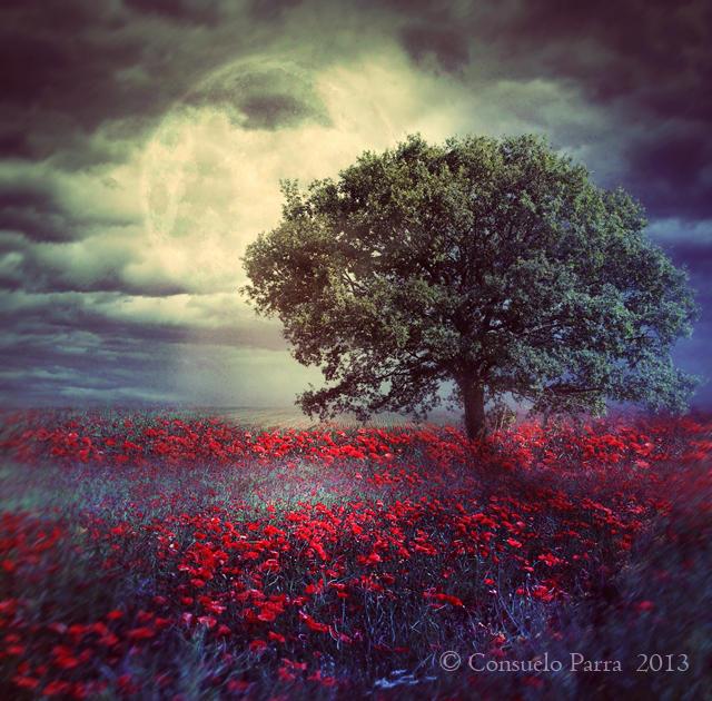 Night prelude by Consuelo-Parra