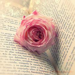 La rosa dormida by Consuelo-Parra