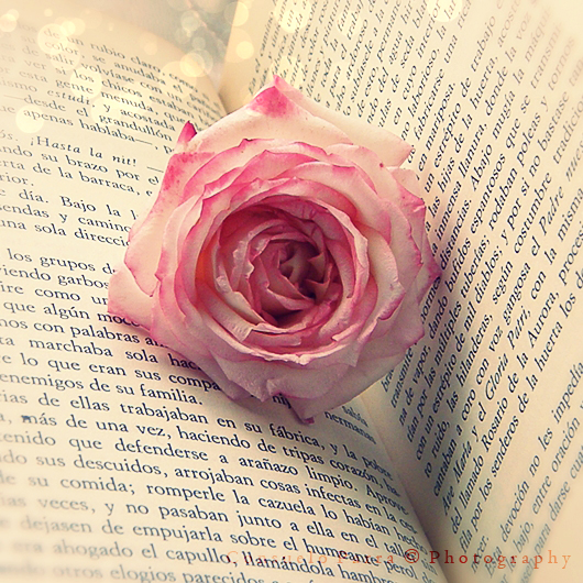 La rosa dormida by Aeternum-Art