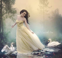 The Chant of Swans by Consuelo-Parra