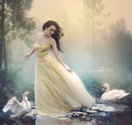 The Chant of Swans