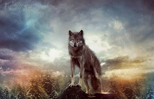 The wolf dream by Consuelo-Parra
